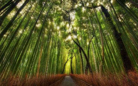 sabiduria del bambu